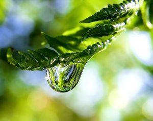 raindropfern