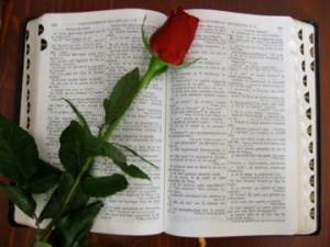 Bibbia_con_rosa
