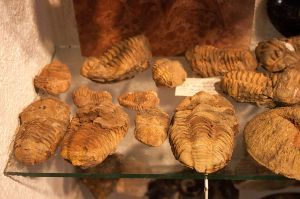 Trilobites_in_the_Mineral_Museum_in_Siófok