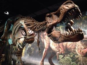 Tyrannosaurus-Rex-mn-sci